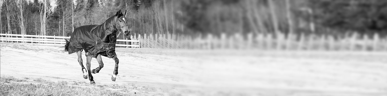 Horse : Materiel equitation, equipement cheval et cavalier, sellerie en ligne